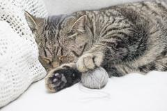 Tired tabby cat relaxing at home - stock photo