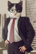 Cat businessman - stock photo