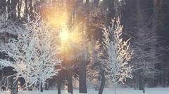 Sunset in winter forest. Sun rays shine through winter trees. Winter sun set - stock footage