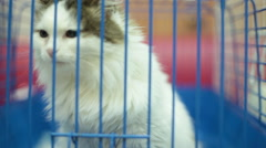 Kitten act attentive. Inside animal shelter cage waiting for adoption Stock Footage