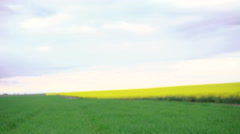 Wheat and rape fields. Boy with homemade helicopter going. 4k Stock Footage