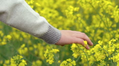 Close up child's hand touches rape blossom on field. Slow motion Stock Footage