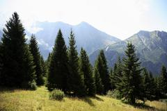 Conifers and mont blanc Stock Photos