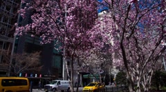 Time Lapse of Flowers Blooming On Park Ave in New York City - stock footage