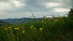 Timelapse sunset on dandelion flowers and mountains Stock Footage