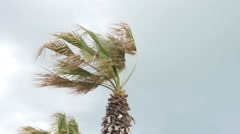 Sea Resort in Italy - storm wind shakes the branches of palm trees Stock Footage