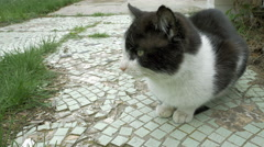 Cat spits whines meows and hisses outdoors Stock Footage