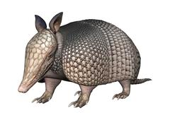 3D Rendering Armadillo on White Stock Illustration