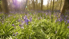 A stunning bluebell wood In full flower in Spring.  - stock footage