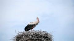 Crane Bird in his Nest Stock Footage