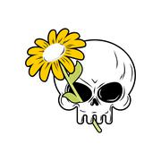 Skull and Chamomile. White flower and death. head of  skeleton and  plant. - stock illustration