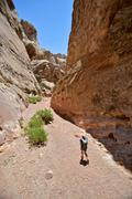 Hiker exploring Little Wild Horse and Bell Canyon Loop, Goblin Valley State Stock Photos