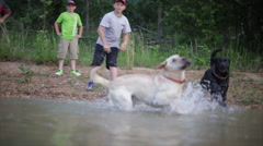 Dogs playing fetch in water Stock Footage