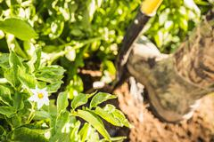 Close up of rubber boot and hoe in vegetable patch Stock Photos
