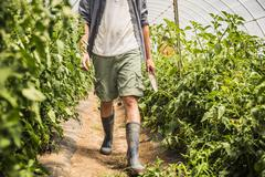 Chest down of man walking through polytunnel carrying trowel - stock photo