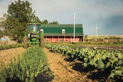 Tractor harvesting rows of vegetables on farm Stock Photos