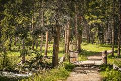 Wooden footbridge in forest, Red Lodge, Montana, USA - stock photo