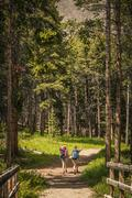 Rear view of young woman and teenage girl hiker hiking in forest, Red Lodge, - stock photo