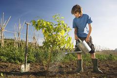 Pre-adolescent boy planting tree Stock Photos