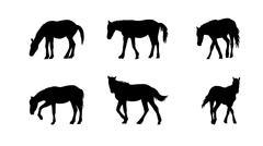 Horse Runs, Hops, Gallops Isolated on White Background - stock illustration