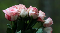 A bouquet of wet pink Roses with water drops in the rain in Spring season. - stock footage