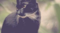 Black intelegent cat is locking interested around himself - stock footage