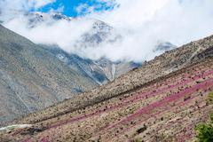 Flowering desert (Spanish: desierto florido) in the Chilean Atacama. The even Stock Photos