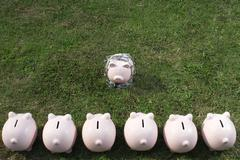 Piggy bank in a line facing one Stock Photos