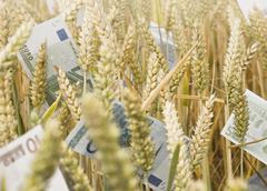Wheat Field with money - stock photo