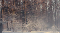 Winter park. Misty morning in winter park. Snow covered trees in winter park - stock footage