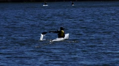 STOCKHOLM: A man kayaking alone in the sea with two kayakers in the background Stock Footage