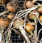 Onions laid out on a metal grill Stock Photos
