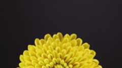 Slowly revolving yellow daisy flower - stock footage