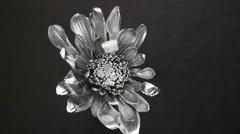 Slowly revolving silver daisy flower Stock Footage