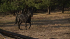 Black horse running free in mountain scene Stock Footage