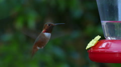 Hummingbird drinking from feeder close-up 4k UHD Stock Footage