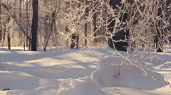 Winter tree. Hoarfrost on tree branches. Snow covered forest in winter - stock footage