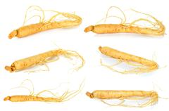 Ginseng isolated on the white background - stock photo