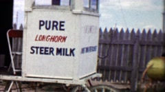 1959: Pure longhorn steer milk ranchers humor joke. Stock Footage