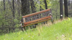 A children's park bench with Dandelion in the Spring season. - stock footage