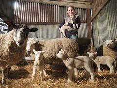 Female Farmer With Sheep & Lambs Stock Photos