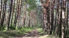 Movement on path among pine forests at sunny summer day Stock Footage