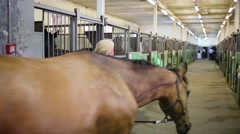 Woman leading horse among stalls with lattices in horse farm Stock Footage
