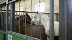 Two horses caress each other in stalls with lattices Stock Footage