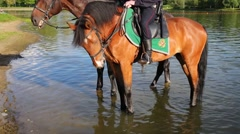 Leg of rider in leather boot and water and saddle with Russian emblem - stock footage
