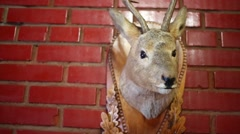 Decorative feature - stuffed deer head on red brick wall Stock Footage
