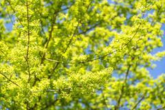 sunny tree detail - stock photo