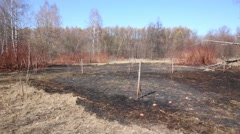 Burned dry grass in empty forest on sunny spring day Stock Footage