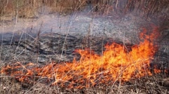 Burning dry grass in empty forest on sunny spring day Stock Footage