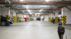 Two Doberman with leash run for ball in underground parking Stock Footage